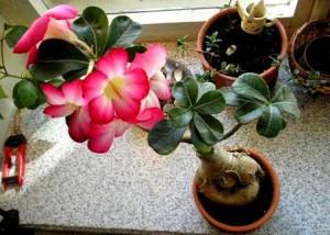 Внимание опасные комнатные растения