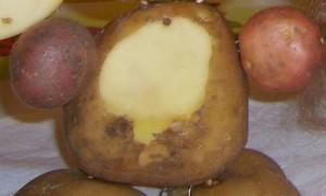 детские поделки из овощей и фруктов